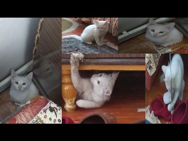 Sevimli Kedi Videosu I Çılgın Fıstık :D