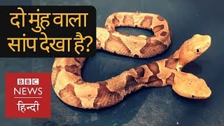 Have You seen rare two-headed Snake? (BBC Hindi)