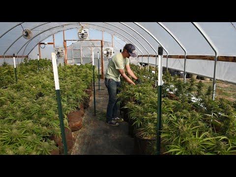 How legal recreational marijuana works in Oregon
