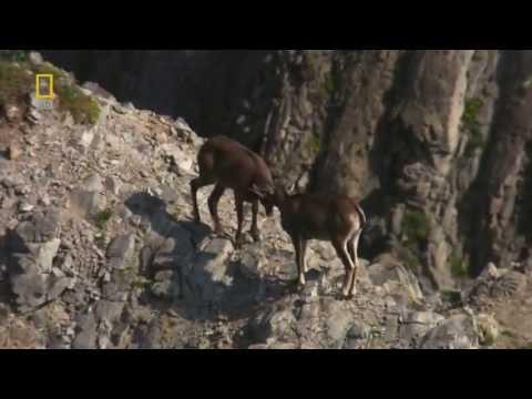 Documentary Wild Russia   Episode 2  Kamchatka Nature