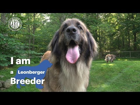I am a Leonberger breeder - Alida Greendyk