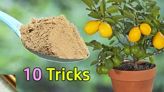 10 TRICKS TO GROW LOTS OF LEMONS | HOW TO GROW LEMON TREE IN POT | CITRUS TREE CARE