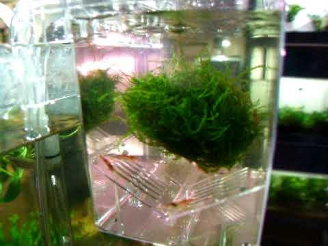 aquarium pondoir avec changement d eau automatique crevette betta vivipare