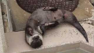 徳山動物園から予告代わりに動画の垂れ流し。 アキラばりに大小あわせて...