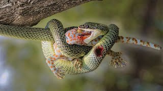 12 Arboreal Animals That Hate Each Other