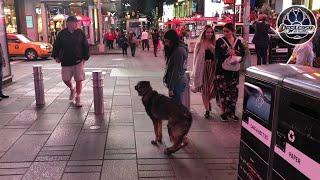 7 Month German Shepherd, Khan   Off Leash Obedience   Best Northern Virginia Dog Trainers