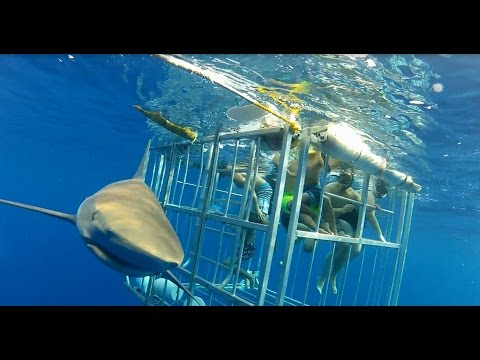 Shark Cage Diving POV & Boat View  - North Shore Shark Adventures - Oahu - Pacific Ocean