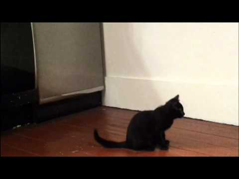 """Cat trick training – first day of """"weave"""""""