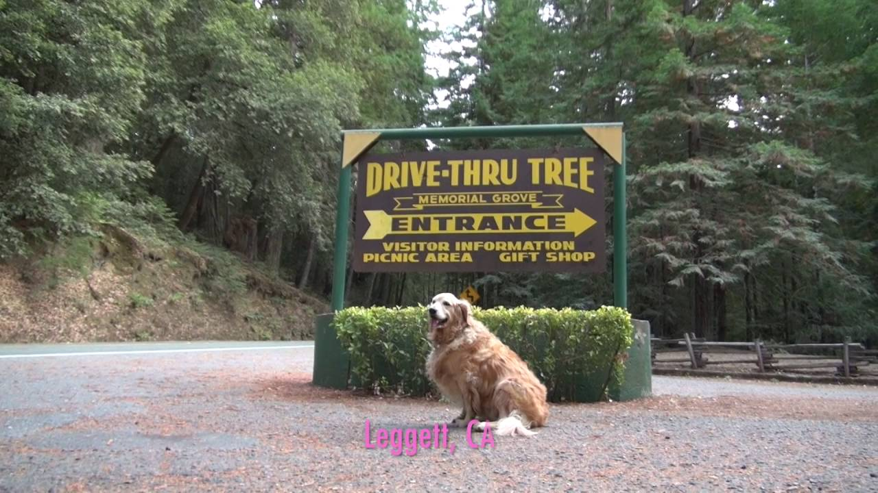 Redwood National Forest, CA - YouTube