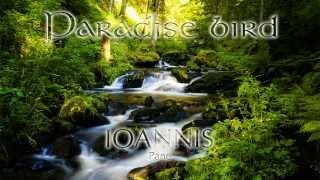 Ioannis Pane - Paradise bird