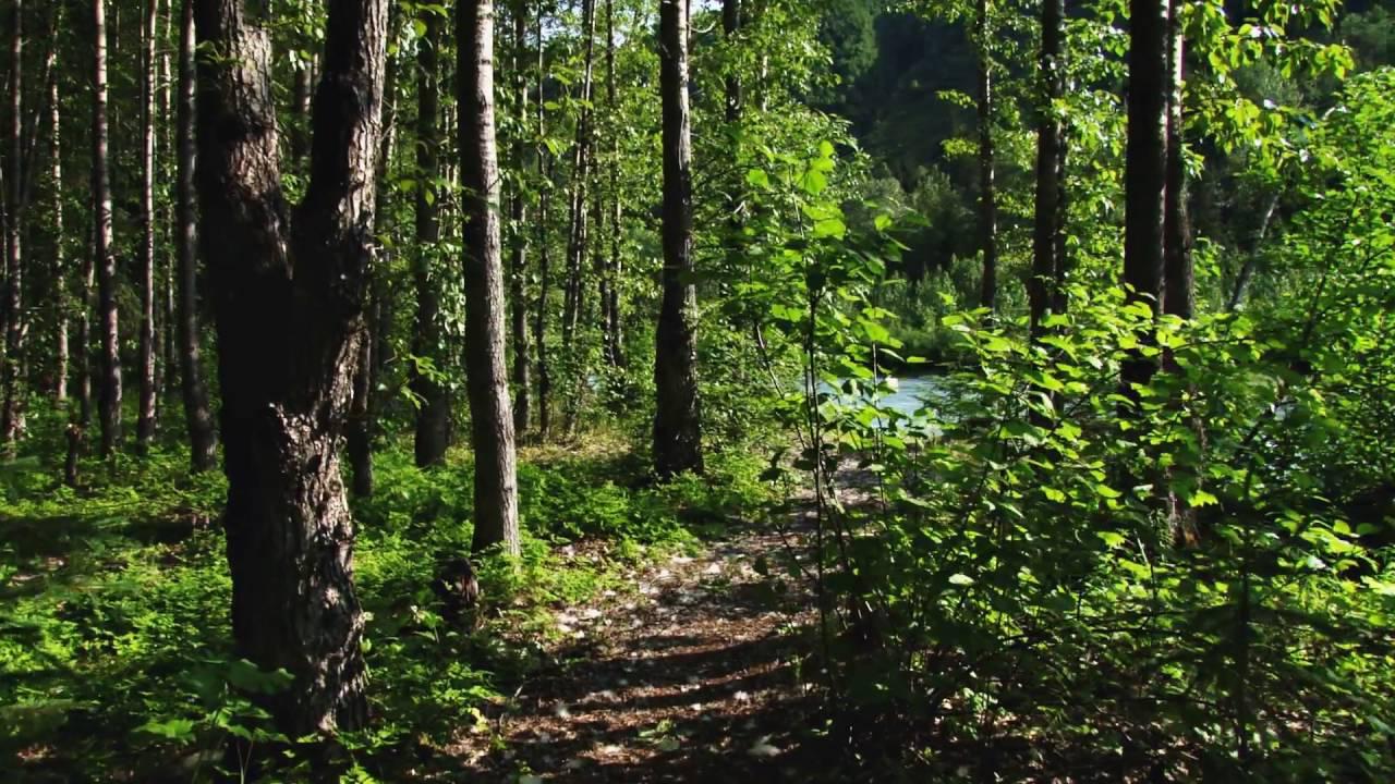 walking through forest path by river in alaska wyimej3er  D