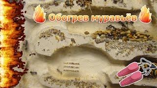 Что будет, если к муравейнику подключить сушилку для обуви? AntMusic #4
