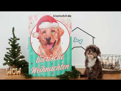 XXL RIESEN Adventskalender für Hunde