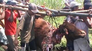 Video HEBOH !! Terulang Lagi ! PENCURIAN Sapi Di Desa Dukuhdimoro MOJOAGUNG Jombang Jawa Timur 2017 download MP3, 3GP, MP4, WEBM, AVI, FLV November 2018