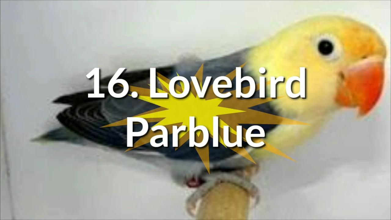 Unduh 99+  Gambar Burung Lovebird Paling Cantik  Terbaik Free