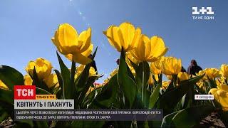 Новости Украины: где порадоваться весенним цветением и пофотографироваться