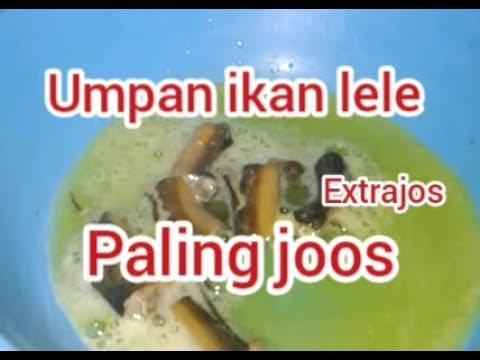 Umpan Ikan Lele Jitu Galatama Susah Makan Youtube