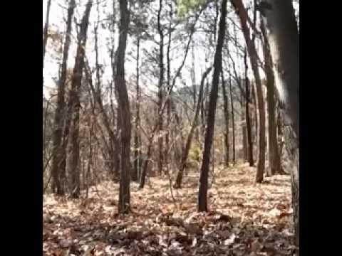 Video de terror chistoso