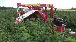 Zbiór porzeczki 2012, kombajn JOANNA-3, black currant harvester JOANNA-3