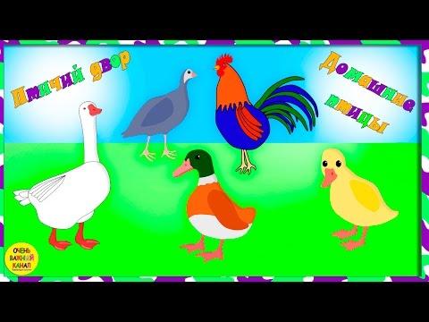 Домашние птицы для детей. Кто как говорит? Развивающие мультфильмы для детей
