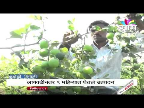 Apples success story