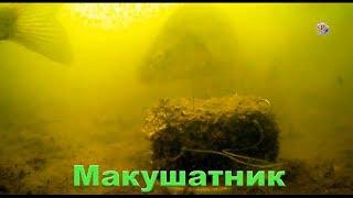 макушатник. Съемка под водой на озере. underwater. Рыбалка. Fishing. angeln. cu c