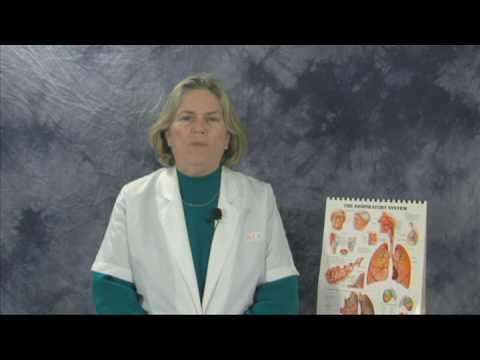 Blood Vessels : Blood Vessel Reaction to Heat
