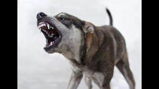 Бездомные животные или от чего собака бывает кусачей?