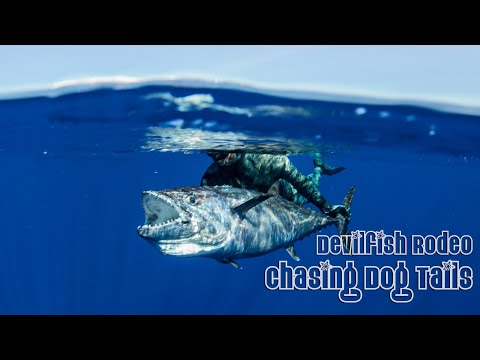Devilfish Rodeo - Chasing Tales - Spearfishing Dogtooth Tuna Madagascar