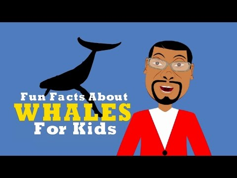 Learn about Whales Fun Facts for Kids Educational Videos for Students
