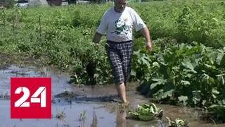 Паводок в Приморье: урожай не спасти