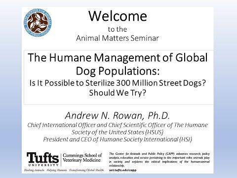 Animal Matters Seminar: The Humane Management of Global Dog Populations