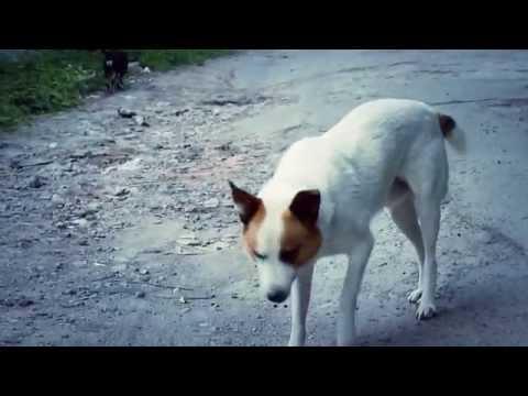 Music video Дима Олейник - Живи