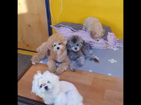 Cute Funny Dog HD video Clips