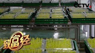 《致富经》 20200203 女博士的神奇工厂| CCTV农业