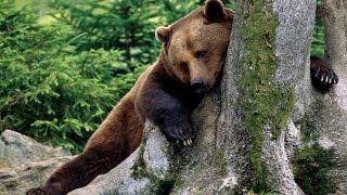 Приколы охота  Медведь шатун, но не балун  Часть 3