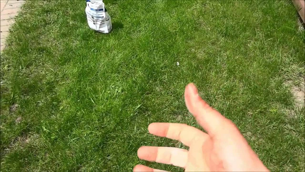 Best way to plant grass seed - How To Spread Grass Seed With Your Hand No Tools Needed