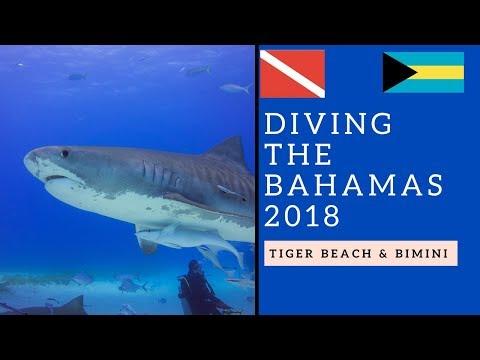 Bahamas 2018 | Wirodive | Sharkschool | Bahamas Master | Tiger Beach - Bimini