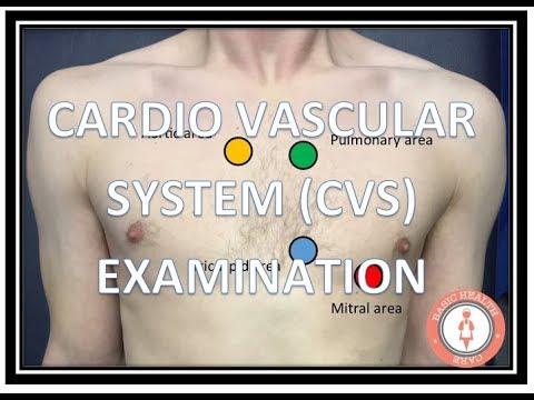CARDIOVASCULAR SYSTEM CVS  EXAMINATION