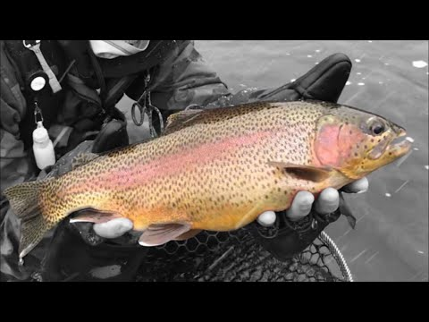 BIG Rainbows On The Eagle River (Winter Fly Fishing In Vail)