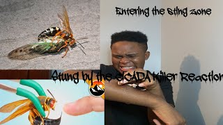 STUNG By CICADA KILLER! REACTION