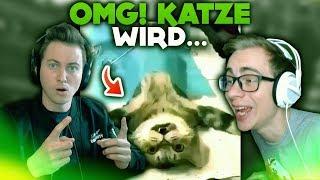 OMG! KATZE WIRD... 🐈😵   WTF Videos
