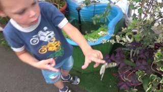 Парк бабочек Коллекция настоящих живых бабочек(Всем привет, дети посетили Парк бабочек, где представлена коллекция настоящих больших живых бабочек. Vlog..., 2016-10-25T09:43:56.000Z)