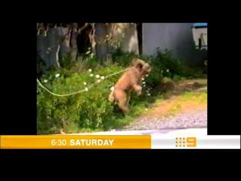 Australia's Funniest Home Videos - Nine Network Promo 2005