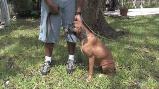 Dog Training Tips : How To Teach A Dog To Shake Hands