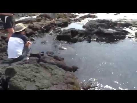 Andy & Linda~ Travel Bog: Punalu