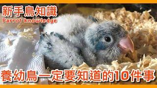 大補帖照顧鸚鵡幼鳥一定要知道的10件事【鸚鵡小木屋】【新手鳥知識】