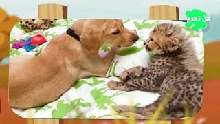 10 حيوانات تبنت أنواعًا أخرى تختلف عنها سبحان الله!!