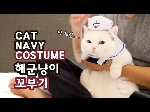 고양이 해군 코스프레 - 꼬부기 1살+7개월 Cat Gato ねこ 短足猫