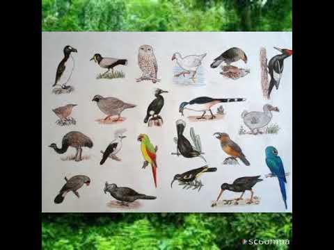 Extinct Birds Species